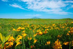 利尻島とサロベツ原野の写真素材 [FYI01781708]