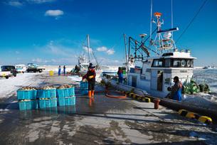 尾岱沼漁港のホタテの荷揚げの写真素材 [FYI01781715]