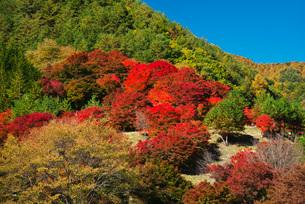 もみじ湖の紅葉の写真素材 [FYI01781759]