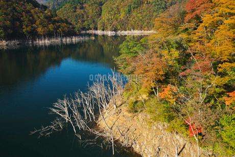 徳山湖の秋の写真素材 [FYI01781791]