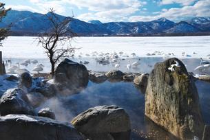 屈斜路湖のコタンの湯とハクチョウの写真素材 [FYI01781852]