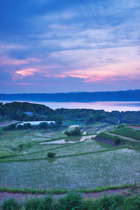 棚田の朝と海の写真素材 [FYI01781923]