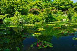 モネの庭 マルモッタンの写真素材 [FYI01782066]