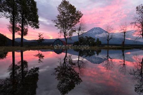 朝霧高原より望む朝焼けの空と富士山の写真素材 [FYI01782400]