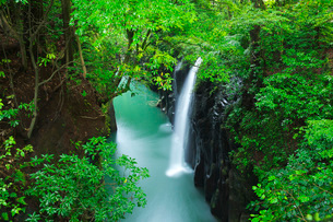 高千穂峡 真名井の滝の写真素材 [FYI01782705]