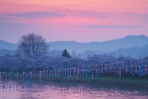 北上展勝地の桜と北上川の朝の写真素材 [FYI01782755]