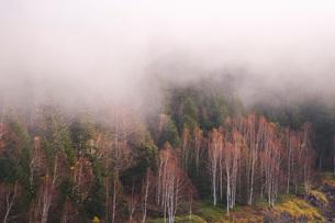 朝霧と木々 大雪ダムの写真素材 [FYI01782791]
