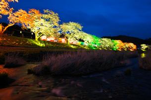 夏井千本桜の夜景の写真素材 [FYI01782802]