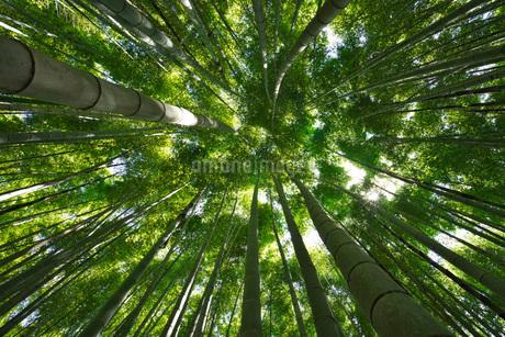 武雄神社の竹林の写真素材 [FYI01782803]