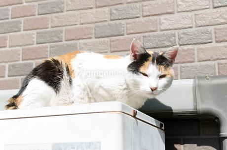 室外機の上に座ってカメラを見る三毛猫の写真素材 [FYI01782835]