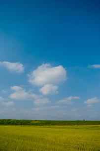 青空 雲 水田 の写真素材 [FYI01782938]