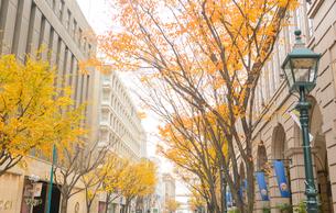 神戸旧居留地の街並みの写真素材 [FYI01783019]