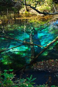 神の子池の秋の写真素材 [FYI01783024]