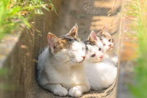 可愛い子猫の写真素材 [FYI01783036]