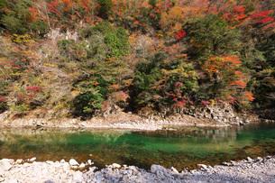 香落渓と青蓮寺川の秋の写真素材 [FYI01783052]