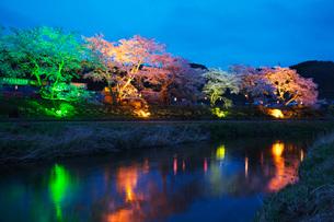 夏井千本桜の夜景の写真素材 [FYI01783058]