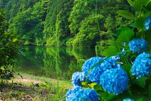 蛇ヶ池とアジサイの写真素材 [FYI01783178]