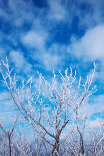 摩周湖の樹氷の写真素材 [FYI01783215]