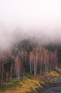 朝霧と木々 大雪ダムの写真素材 [FYI01783221]