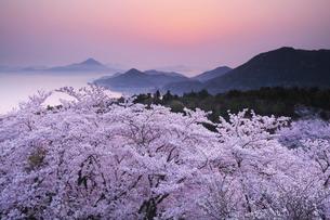 開山公園の日の出と桜の写真素材 [FYI01783259]