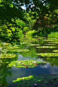 モネの庭 マルモッタンの写真素材 [FYI01783327]