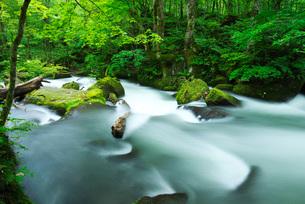 奥入瀬渓流 阿修羅の流れの写真素材 [FYI01783379]