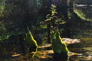 神の子池の秋の写真素材 [FYI01783407]