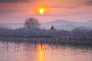 北上展勝地の桜と北上川の日の出の写真素材 [FYI01783418]