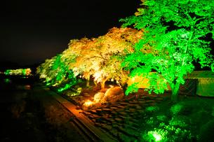 夏井千本桜の夜景の写真素材 [FYI01783433]