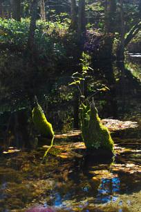 神の子池の秋の写真素材 [FYI01783465]