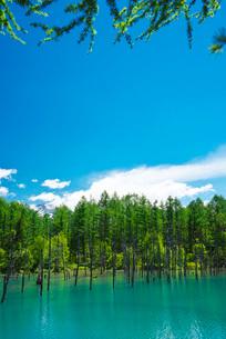 青い池と十勝岳連峰の写真素材 [FYI01783471]