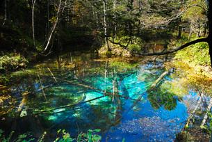 神の子池の秋の写真素材 [FYI01783511]