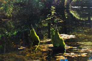 神の子池の秋の写真素材 [FYI01783514]