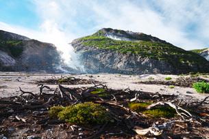 硫黄山と枯木の写真素材 [FYI01783523]
