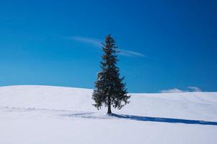 クリスマスツリーの木の写真素材 [FYI01783526]