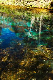 神の子池の秋の写真素材 [FYI01783612]