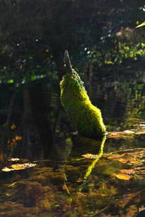 神の子池の秋の写真素材 [FYI01783625]