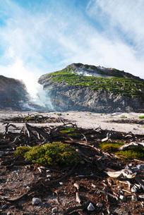 硫黄山と枯木の写真素材 [FYI01783680]