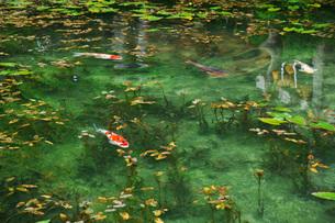 モネの池 名もなき池の写真素材 [FYI01783760]