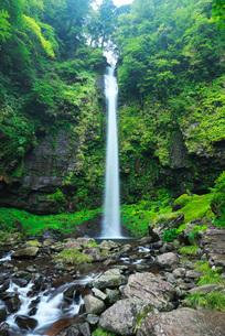 阿弥陀ヶ滝の写真素材 [FYI01783761]