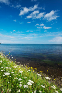 サロマ湖と野の花の写真素材 [FYI01783866]