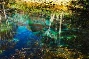 神の子池の秋の写真素材 [FYI01783871]