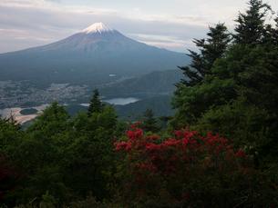 新道峠より望む富士山とツツジの写真素材 [FYI01783961]