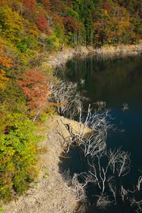 徳山湖の秋の写真素材 [FYI01783963]