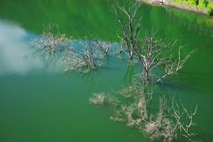 奥州湖と枯木の写真素材 [FYI01784002]