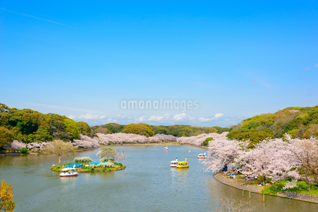 春の兵庫県立 明石公園の写真素材 [FYI01784005]