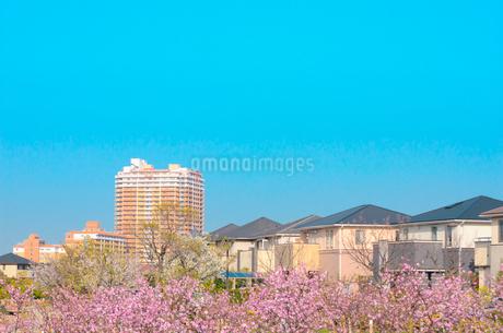 関西の住宅の写真素材 [FYI01784186]