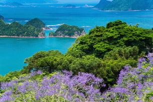 ジャカランダ咲く日南海岸の写真素材 [FYI01784223]