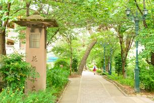 宝塚花の道の写真素材 [FYI01784224]