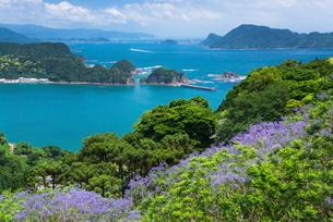 ジャカランダ咲く日南海岸の写真素材 [FYI01784314]